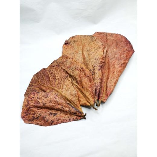 Ketapang liście 5 sztuk