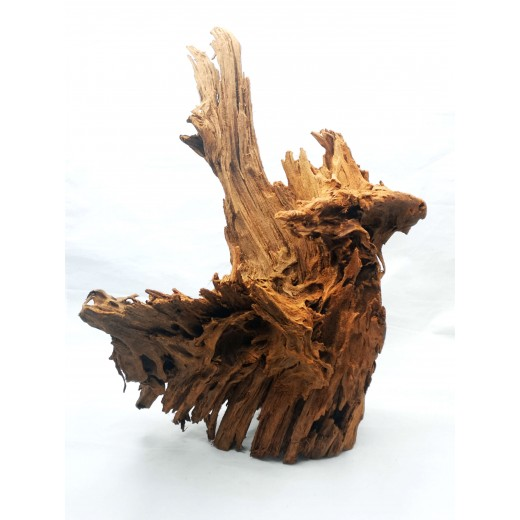 Korzeń mangrowca 30-60 cm