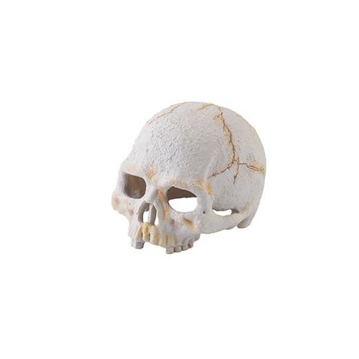 Kryjówka Sztuczna czaszka...