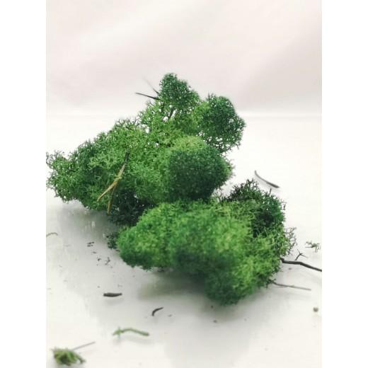 Chrobotek ciemny zielony 30g