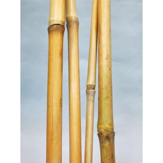 Tyczka bambusowa 50 cm